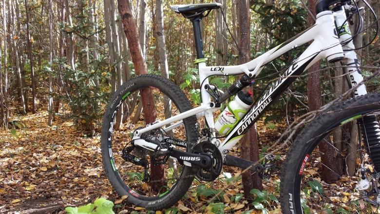 Bike resting against trees