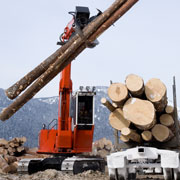Forestry and Pulp & Paper
