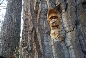 Face carved into tree bark