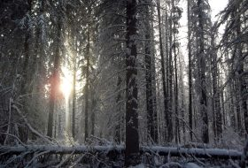 Sun breaking through the woods during winter