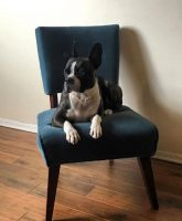 dog on a chair