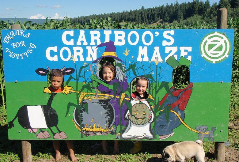 corn maze children