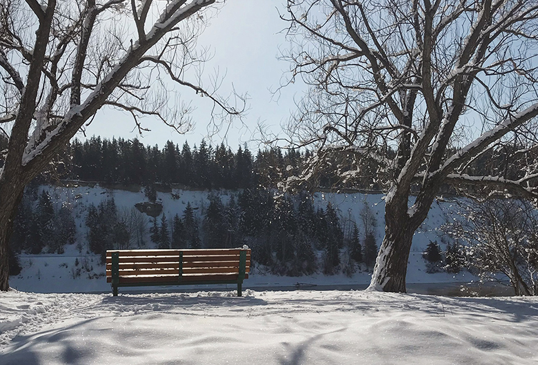 bench on snow