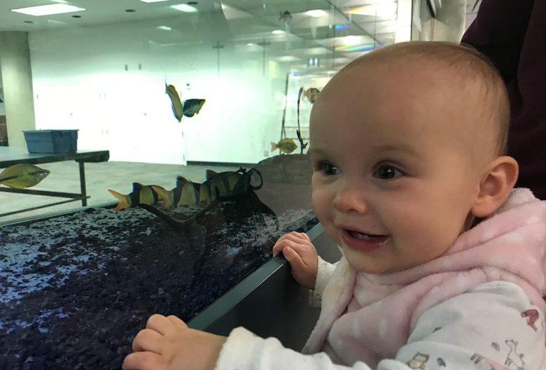 baby fish tank
