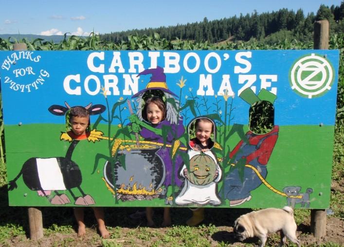 Cariboo corn maze