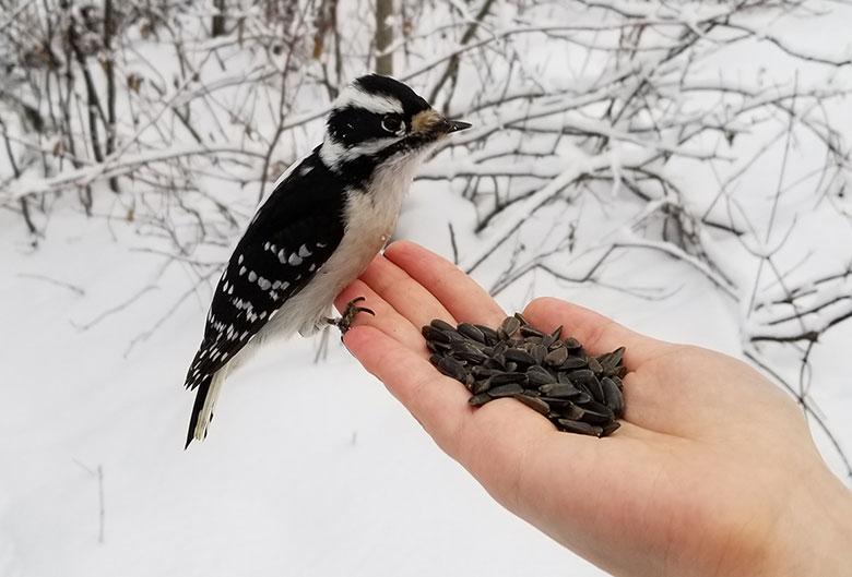 bird seeds hand