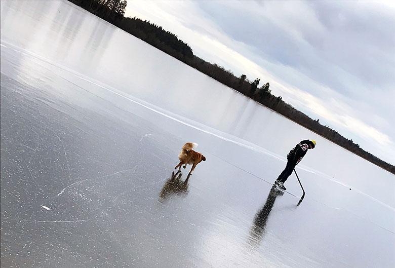 boy dog skating lake
